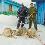 Волки Башкирии