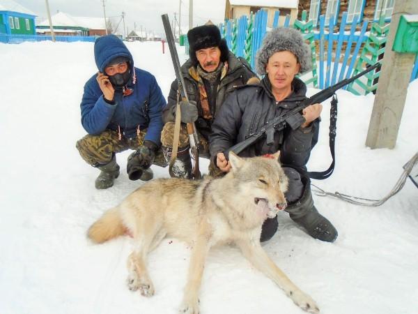 волки Башкортостана