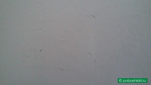 Грязные стены в квартире
