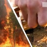 Как выбраться из леса? Опасный способ