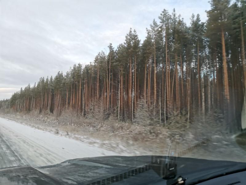 Леса Ханты-Мансийского округа